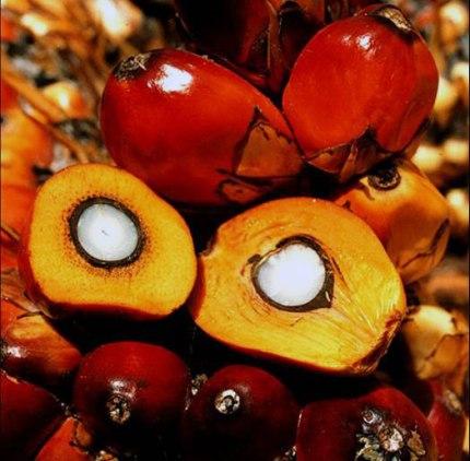 alimenti-senza-glutine-qualità