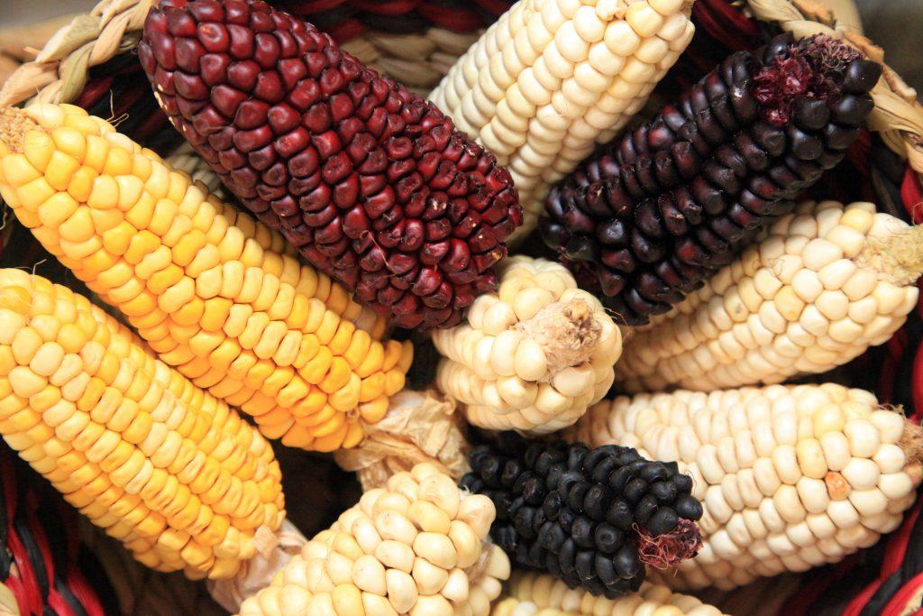farine di mais riso e castagne senza glutine